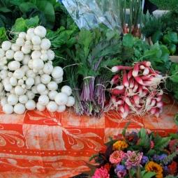 turnips, mizuna, radishes
