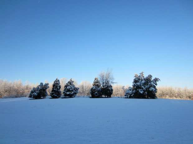 snow on the cedars