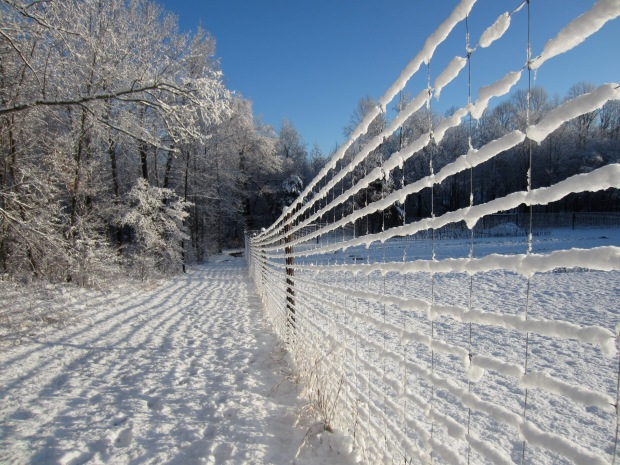 snow on the deer fence
