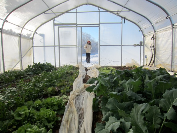high tunnel winter greens