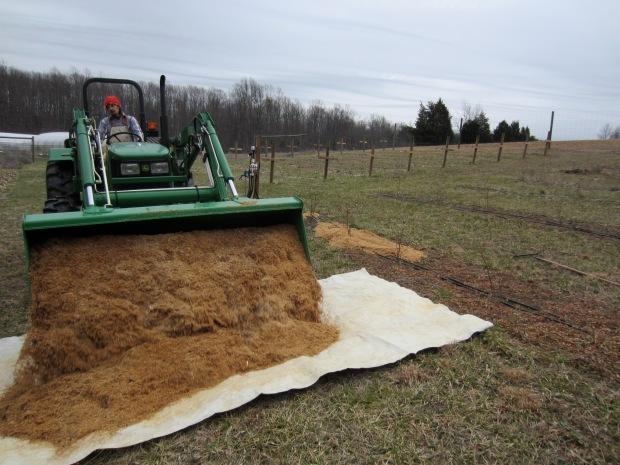 mulching with sawdust