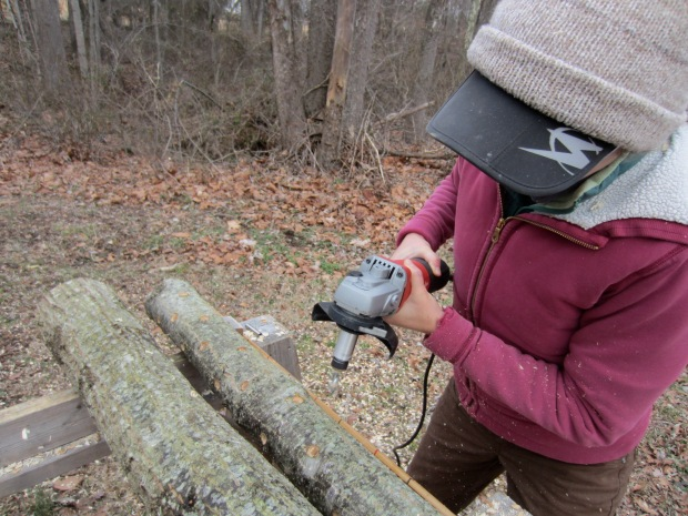 drilling holes for shiitake spawn
