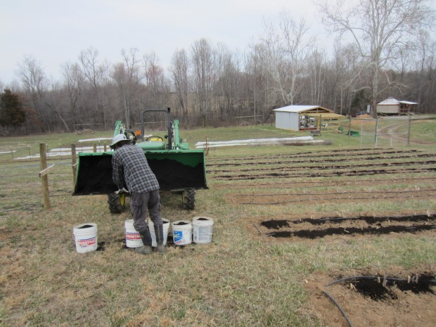 composting the asparagus patch