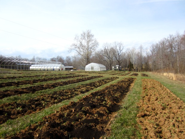 composted rows