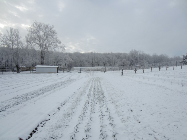 snow-covered farm in spring