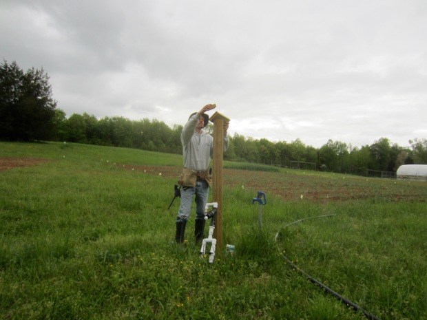 installing more irrigation posts for our new growing area