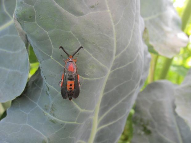 darth vader bug