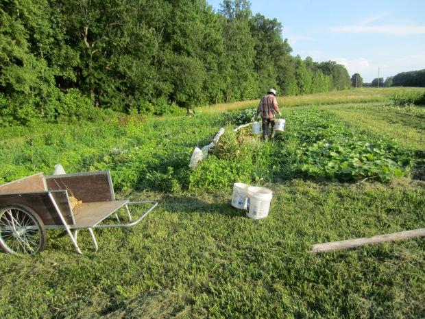 spring crop cleanup