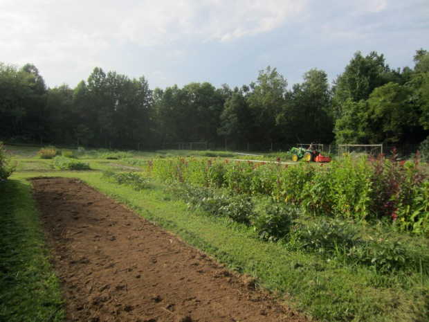 tilling for fall crops