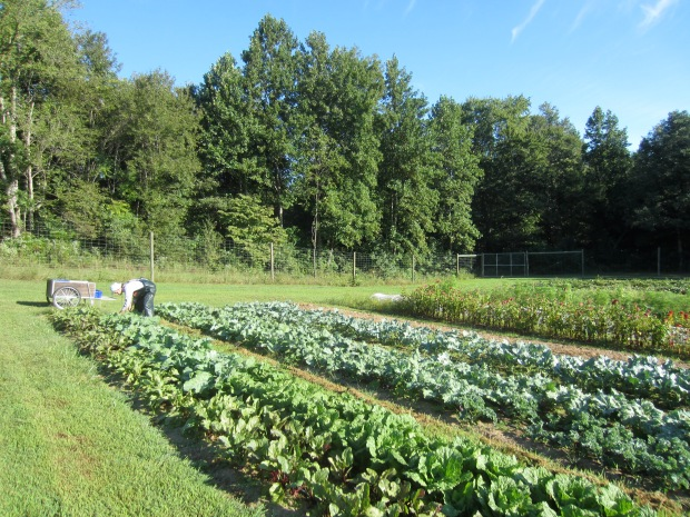 first fall crops