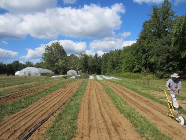 september spinach seeding
