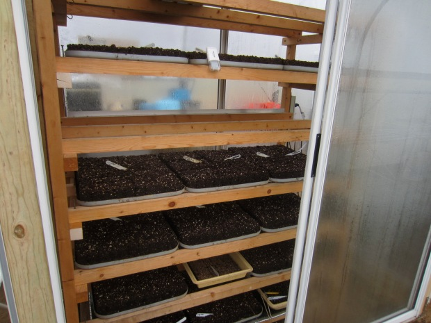 germinating seeds for a new season