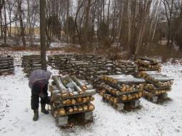 shiitake log yard