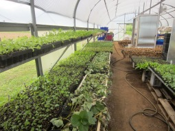 transplant greenhouse