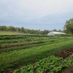 crop diversity